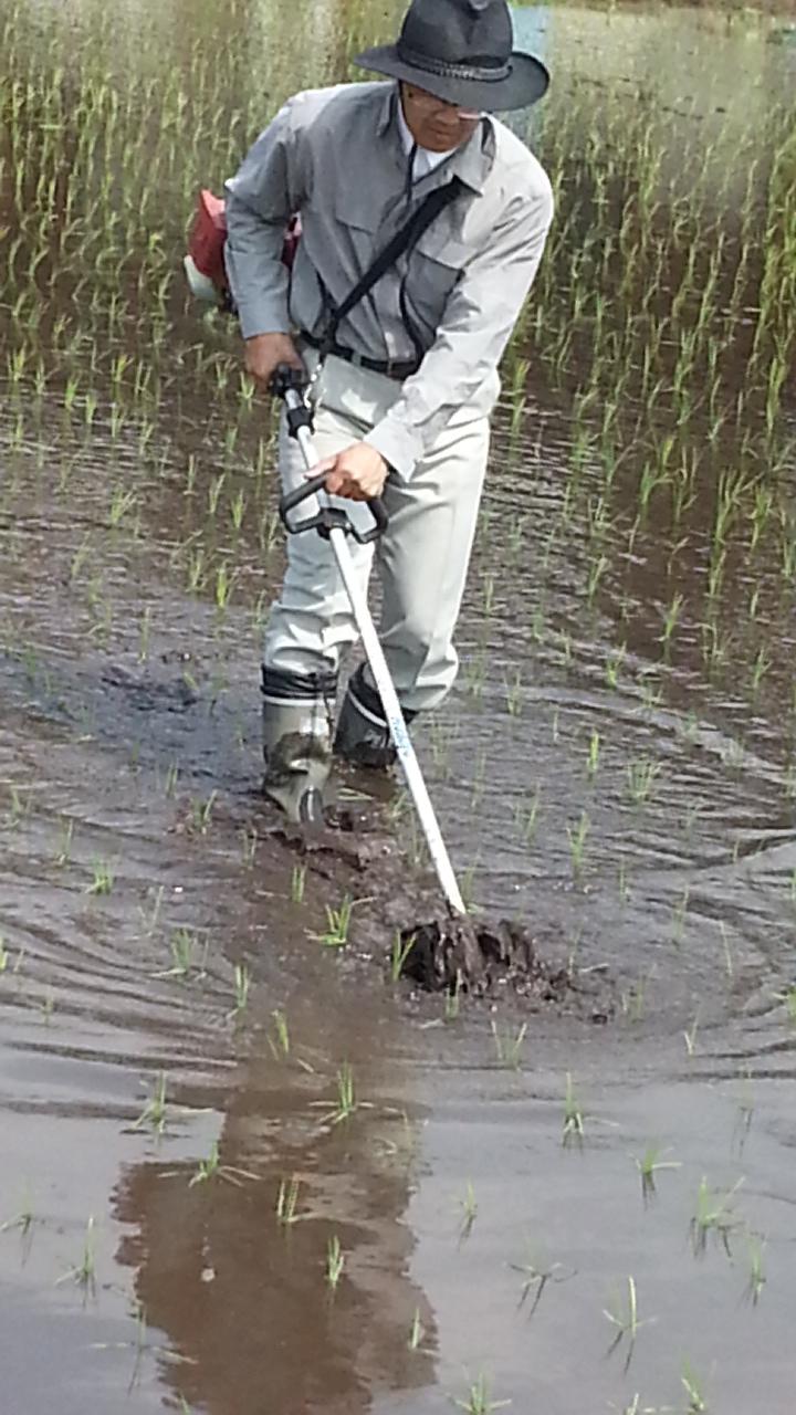 水草取りまー